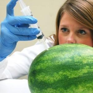 percorso formativo tecnologo alimentare