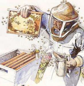 apicoltore-diventare