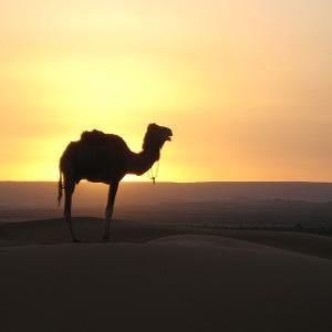 lavorare in marocco
