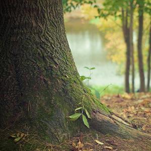 come diventare guardia ambientale